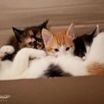 Котята — все по домам