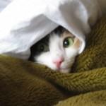 Советы по уходу за кошкой в зимнюю пору