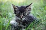 просто котенок (1)