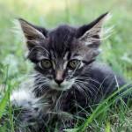 Просто котенок :)