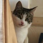 Просто хороший кот :) дома!