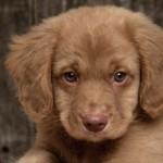Готовы ли вы завести щенка?