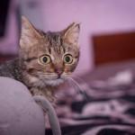 Котик Вовчег дома