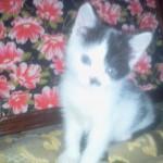 Малюсенький котеночек..:-) остался во «временном доме» навегда