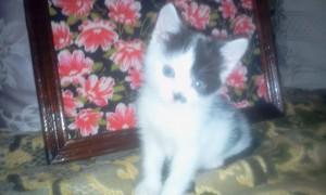 Котенок малыш Фото1