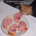 Моя кошка не ест! Что случилось?